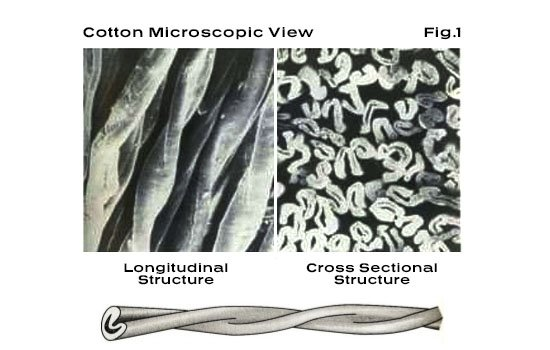Cotton Microscopic View